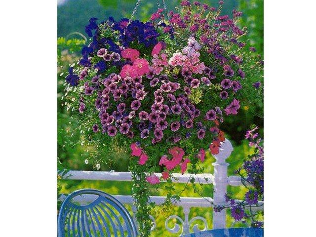 Оформление балконов и лоджий цветами - планы цветников и сад.