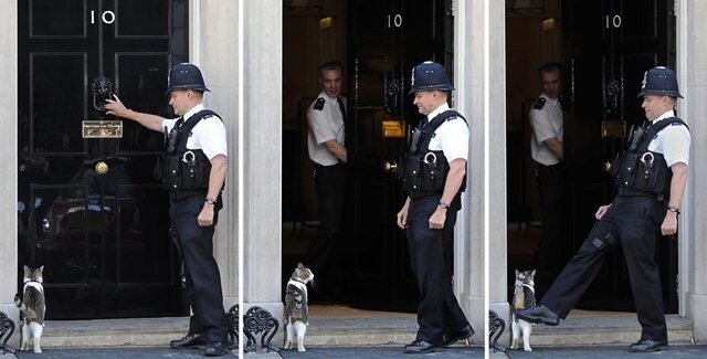BRITAIN-ANIMAL-OFFBEAT