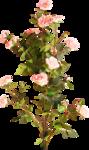«романтический сад» 0_648f2_82477586_S