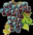 Виноград  0_6633c_da75dbed_S