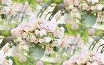blooms7_1 (11).jpg