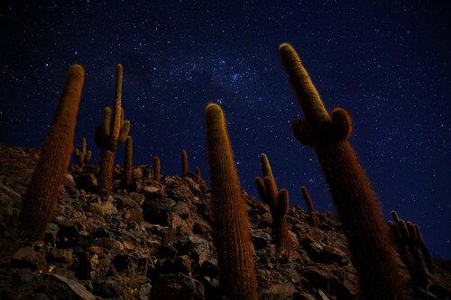Ночь в долине кактусов