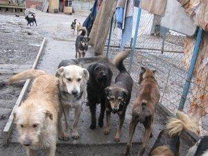 В Молдове активно плодятся бездомные животные