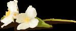 NLD Flower 10 sh (2).png