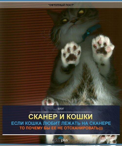 Лапко-позитивные сканы. КОШКИ НА СКАНЕРЕ)). 33 кошки.