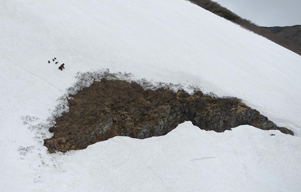 Самец прошел прямо под скалой, но то ли не заметил семью, то ли сделал вид...