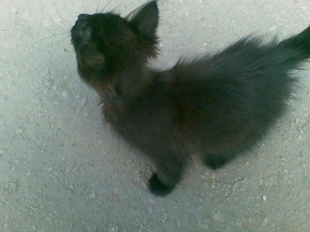 Котик на улице Златоуста