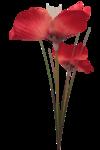 feli_ftl_flowers2.png