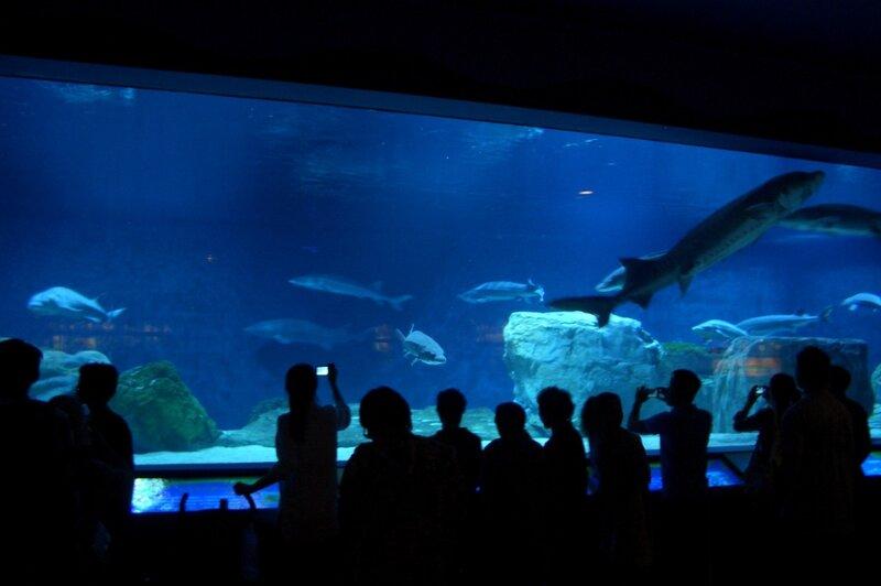 Океанариум, Пекинский зоопарк