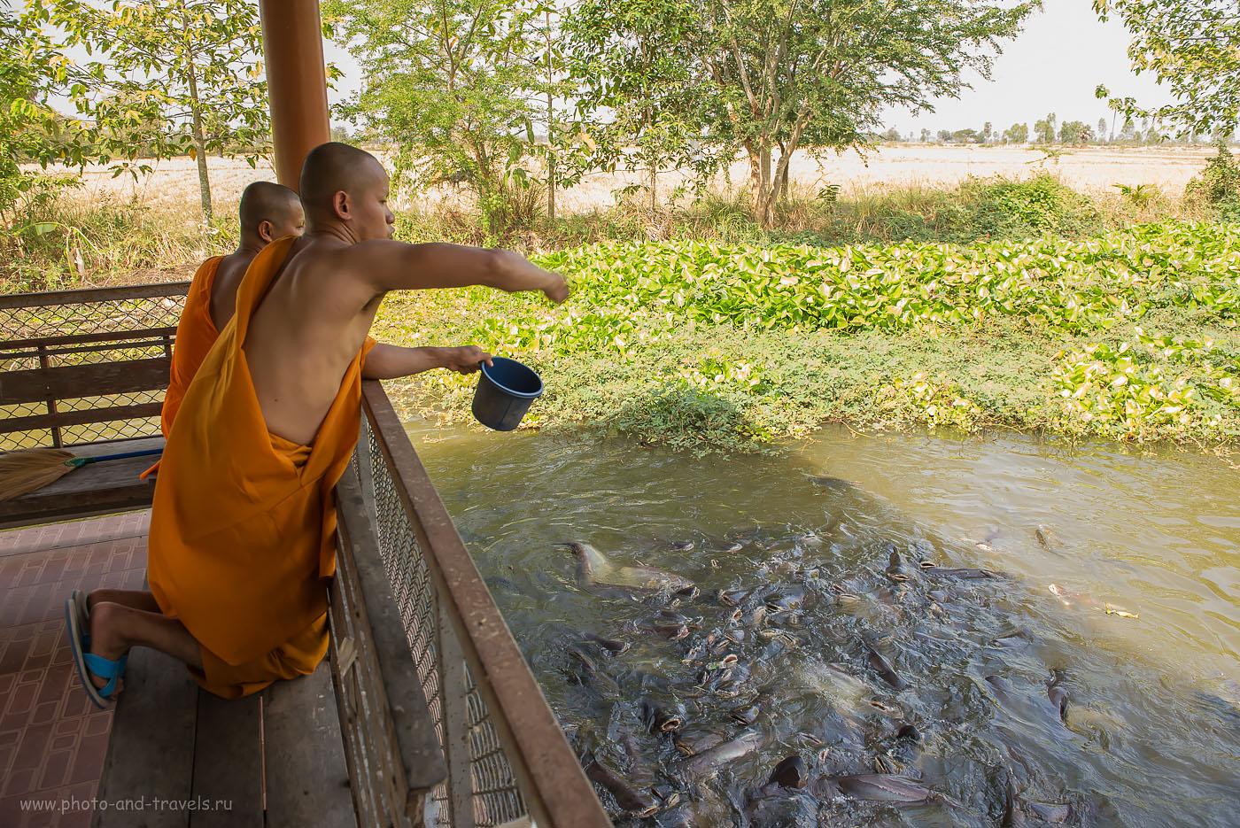 Фото 27. Ничто человеческое им не чуждо... Поездка по Таиланду на машине. Интересные места недалеко от города Хуахин.