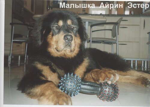 http://img-fotki.yandex.ru/get/4706/6307740.3/0_7531c_36903db1_L.jpg