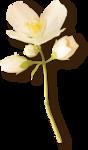 NLD Flower 11 sh.png