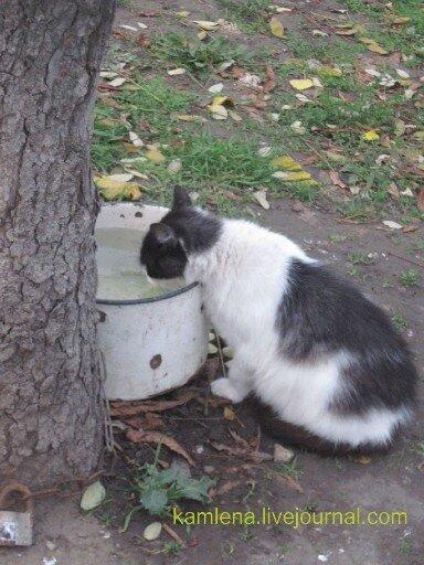 кошка, пить, похмелье