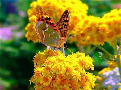 Лето - бабочка.jpg