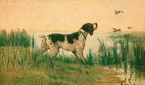 А. Мако. Курляндский легавый.