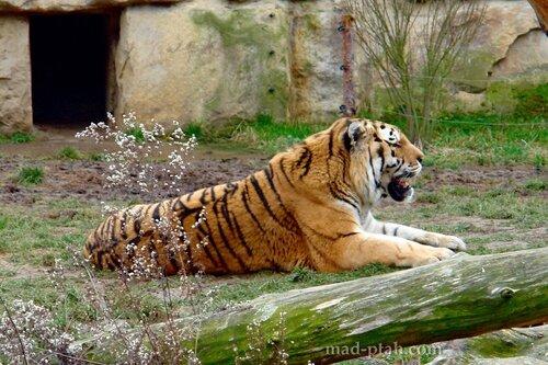 чехия, прага, зоопарк