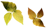 GoldenSun_Colors of the autumn_ element 30.png
