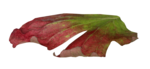 natali_design_apple_leaves15.png