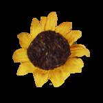 natali_design_apple_sunflower1.png