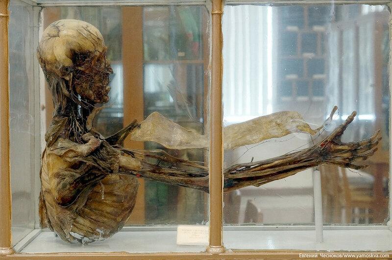 Лето. МГМУ. Музей анатомии. 27.08.15.55..jpg