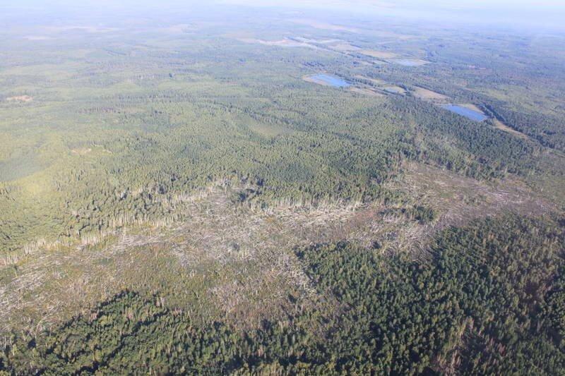 Ураган повалил лес