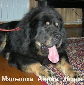 http://img-fotki.yandex.ru/get/4707/6307740.3/0_75317_f6509162_L.jpg