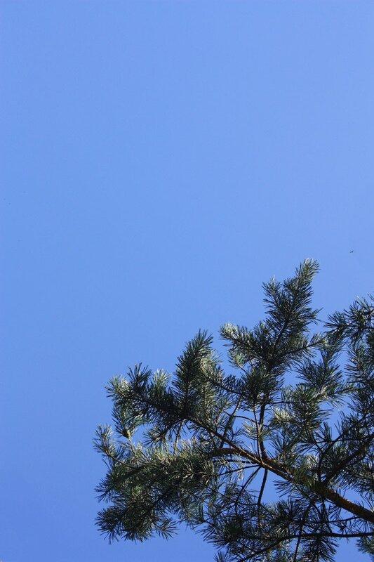Небо и лес