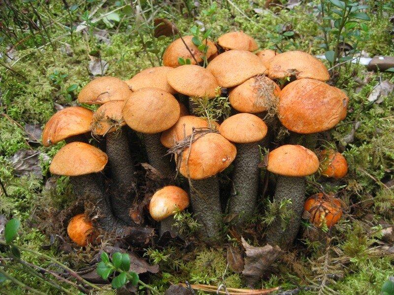 нью-йоркцем к чему сняться грибыприметы кого так называл,говоря