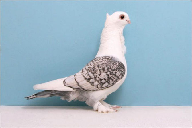 Фотографии голубей