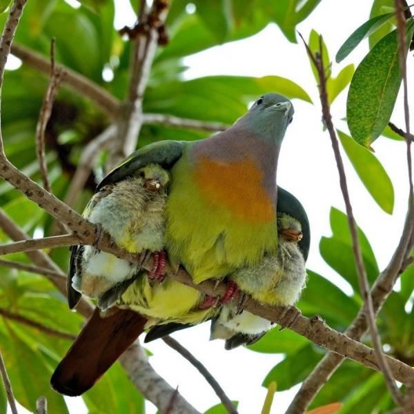 птица с детенышами