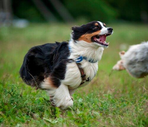 Вес собаки и анатомия для работы/спорта - Страница 5 0_1b392a_da0c3fc_L