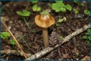 http://img-fotki.yandex.ru/get/4708/15842935.140/0_d0944_386f32df_orig.jpg