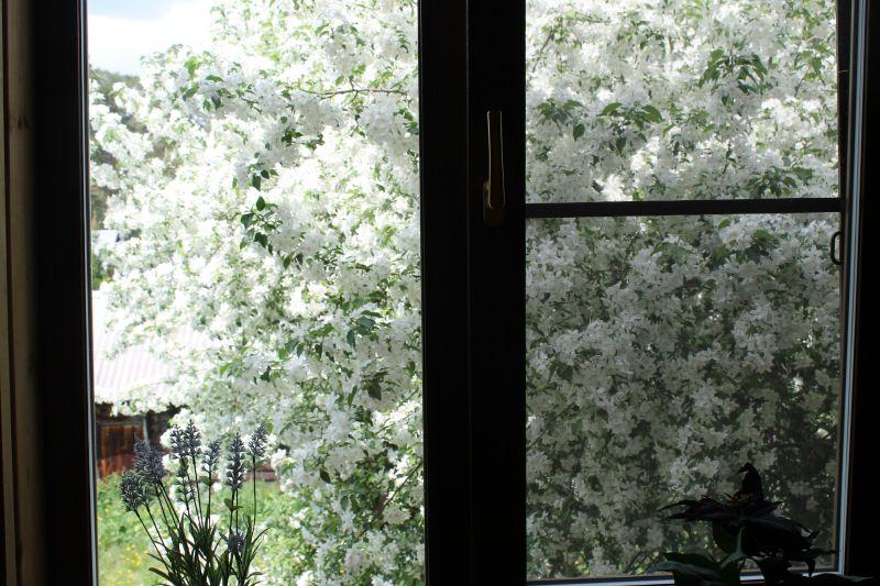 На втором этаже за окном открывается прекрасный вид на цветущую яблоню. (09.06.2015)
