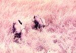 Эфиопия слоны.jpg
