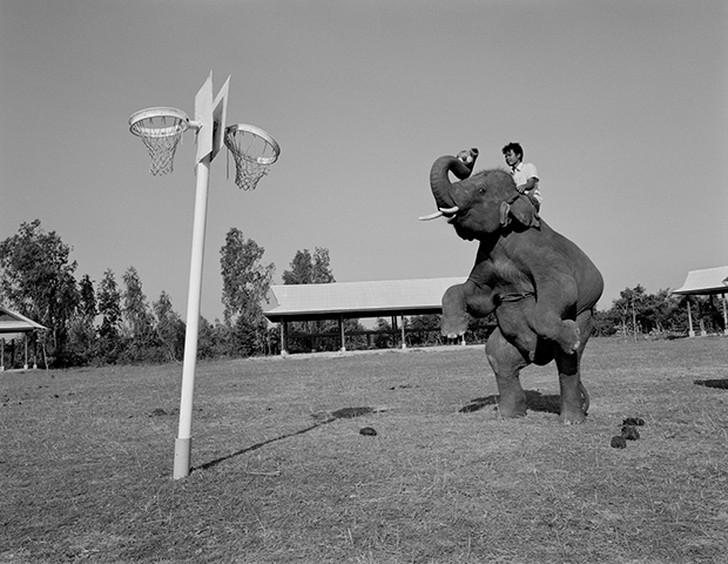 8. Слон репетирует перед выступлением для туристов в деревне Бан Та Кланг в Таиланде.