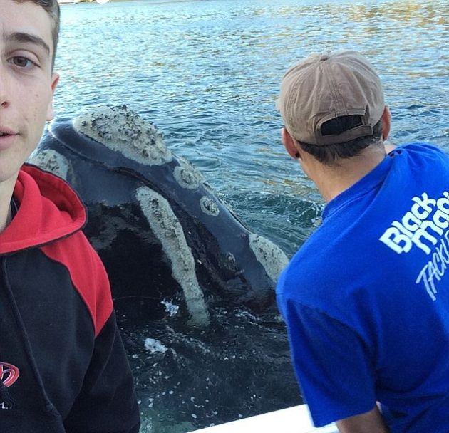 В Австралии кит попросил помощи у людей