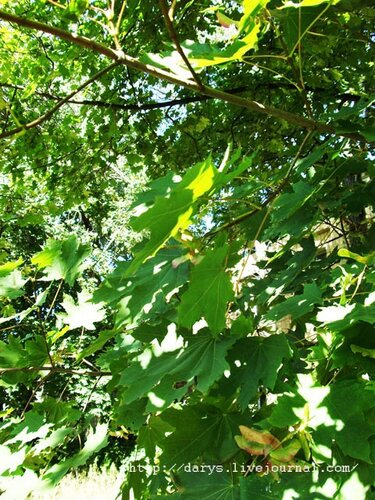 Дерево, растущее возле руин конторы