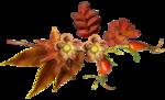 Autumn Crunch WA 13.png