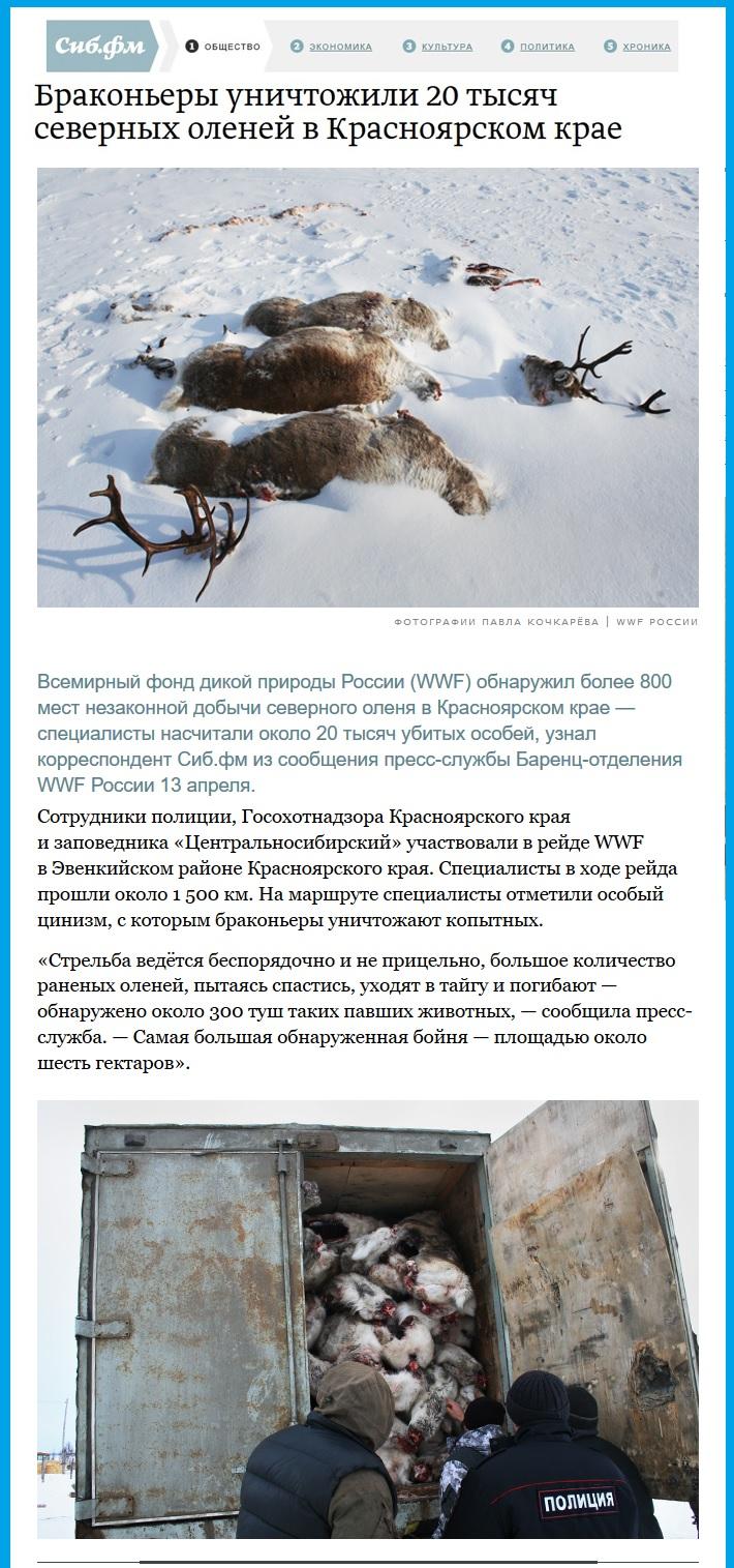 Уничтожение браконьерами северных оленей.