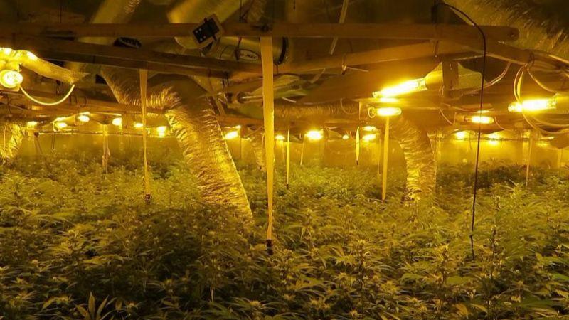 Плантация марихуаны в старой мельнице