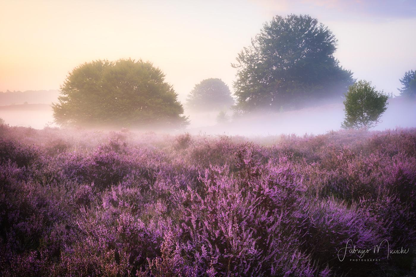 Walking through the purple hills / фото Fabrizio Micciche