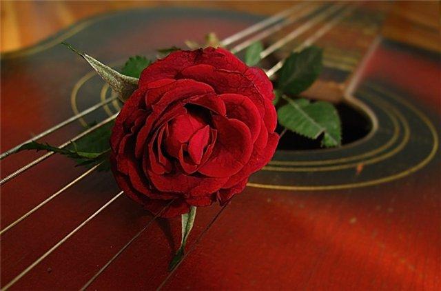 С днем музыки. Роза на гитаре