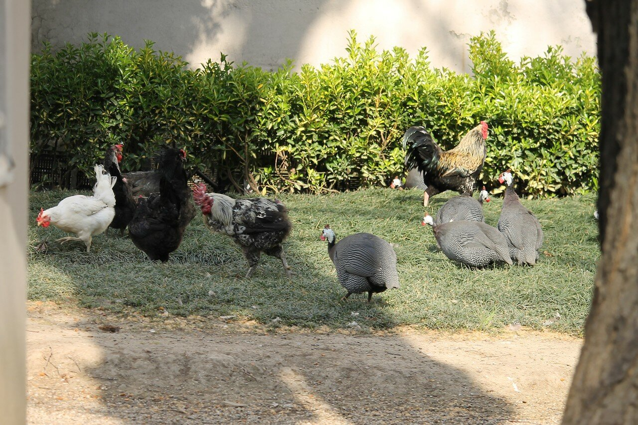 Istanbul. Poultry house of Dolmabahce Palace