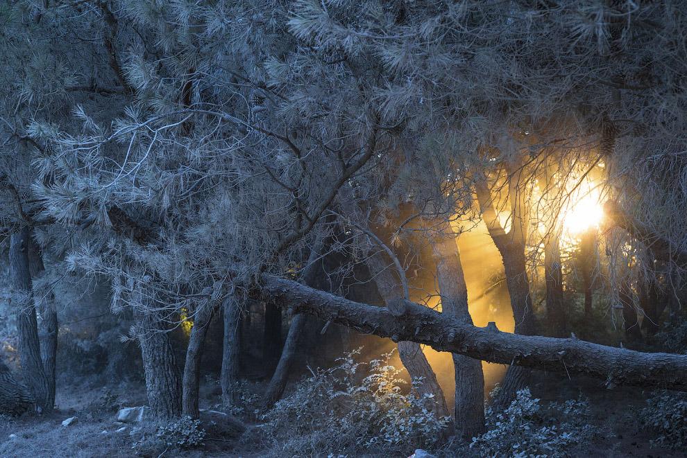 9. Граница затвердевшей лавы и леса. (Фото Placido Faranda | National Geographic Travel Photogr