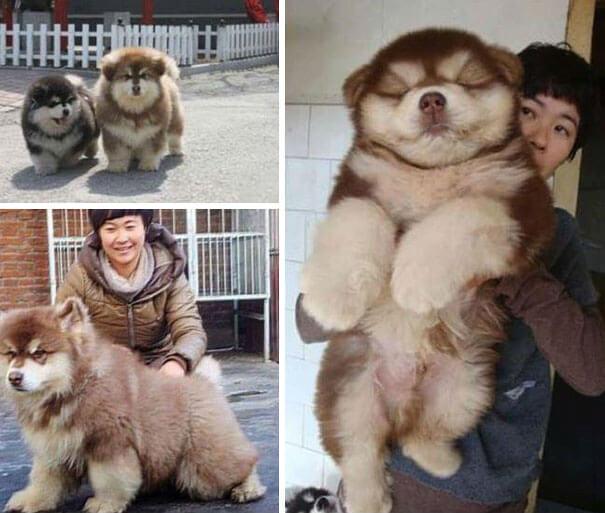 Какими будут щенки, если скрестить две разные породы собак