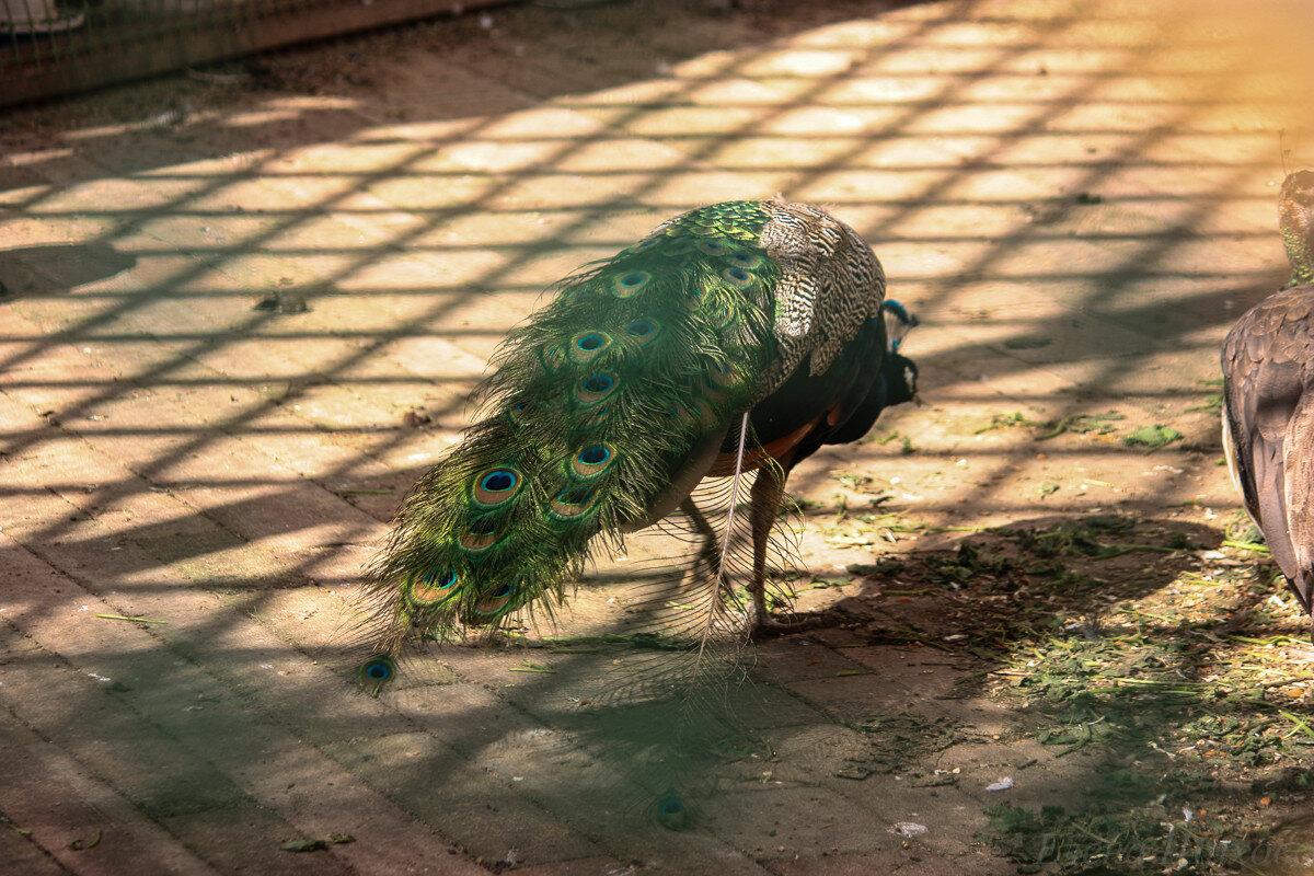 Птица-23.jpg