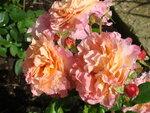 ..розовые розы!!!!!!!!!!!!!!