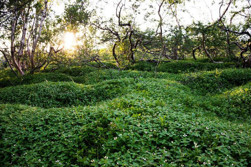 березовый лес в тундре