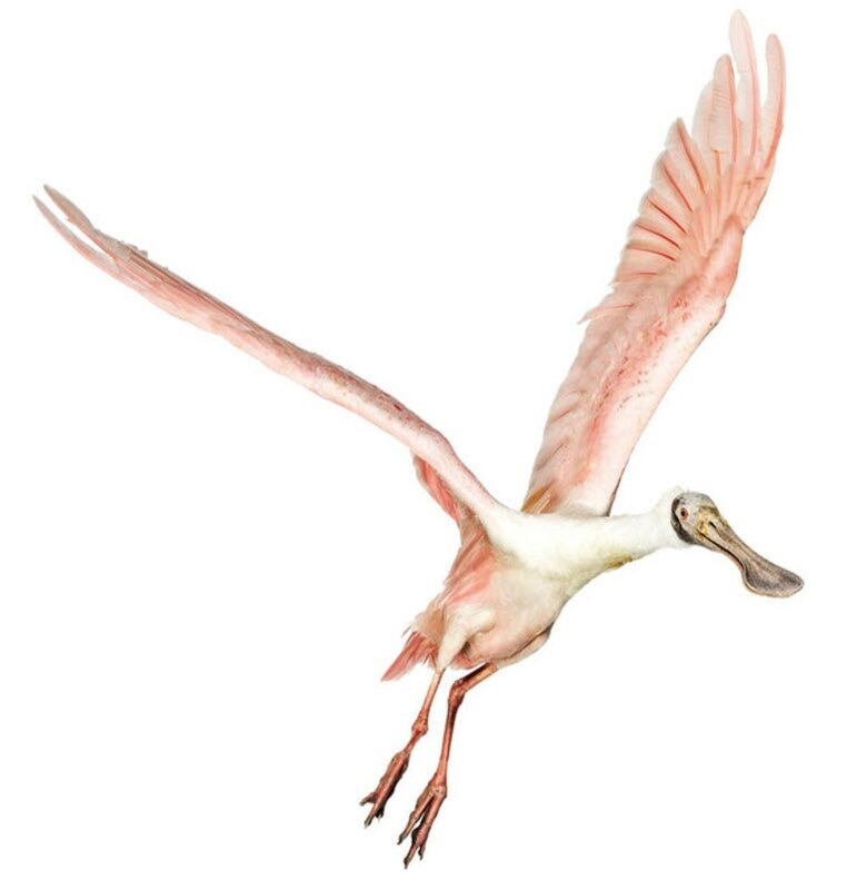 Птицы Эндрю Цукермана.