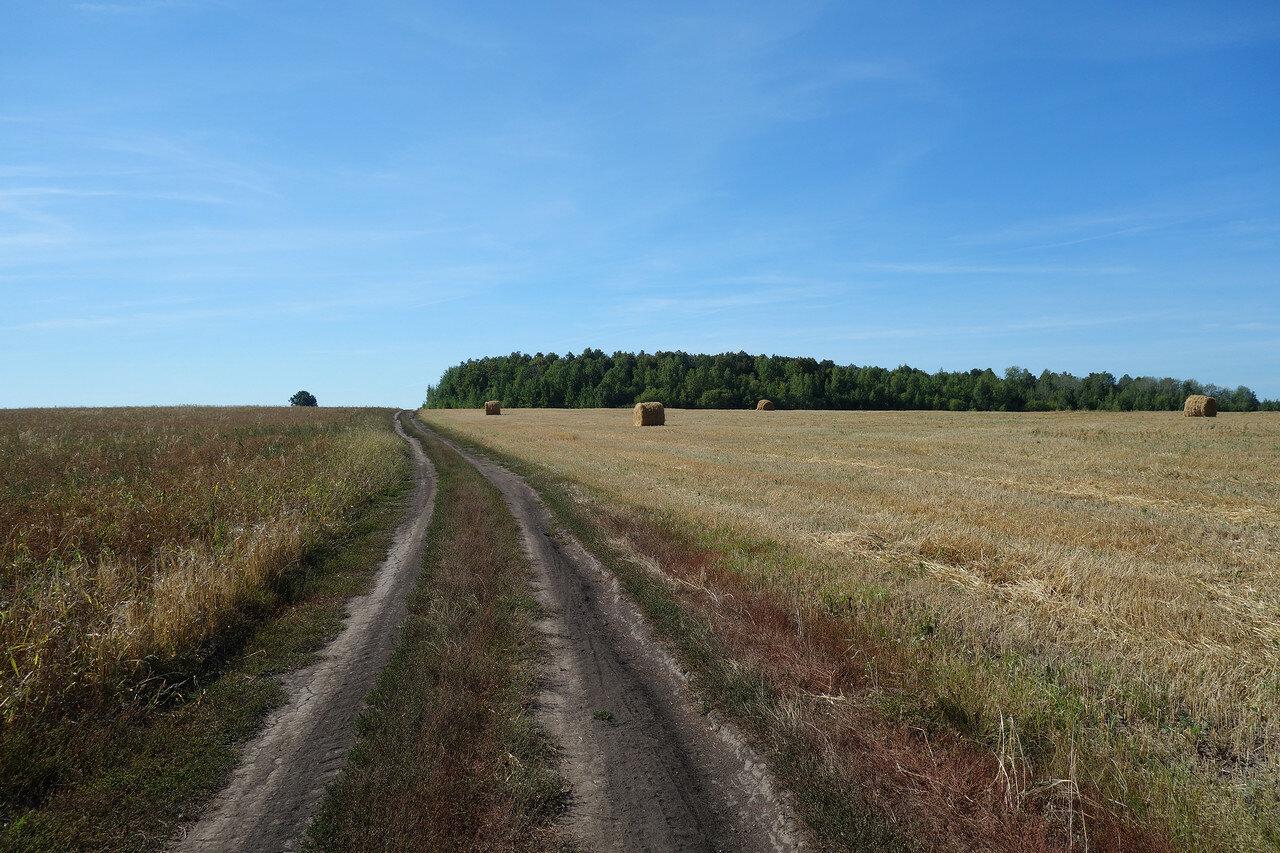 поля и перелески Михайловского уезда
